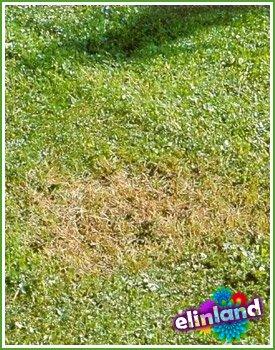 Нормы и рекомендации по поливу газона