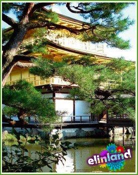 Символизм элементов японского сада. Растения