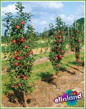 Группа риска, плодовые деревья
