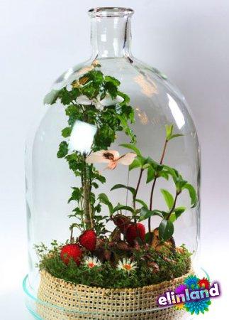 Необычный флорариум, сад в бутылке