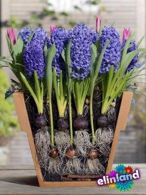 Группа риска, луковичные и клубневые цветы
