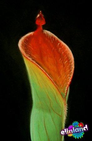 Гелиамфора