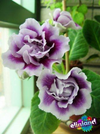 Стимуляция цветения комнатных растений